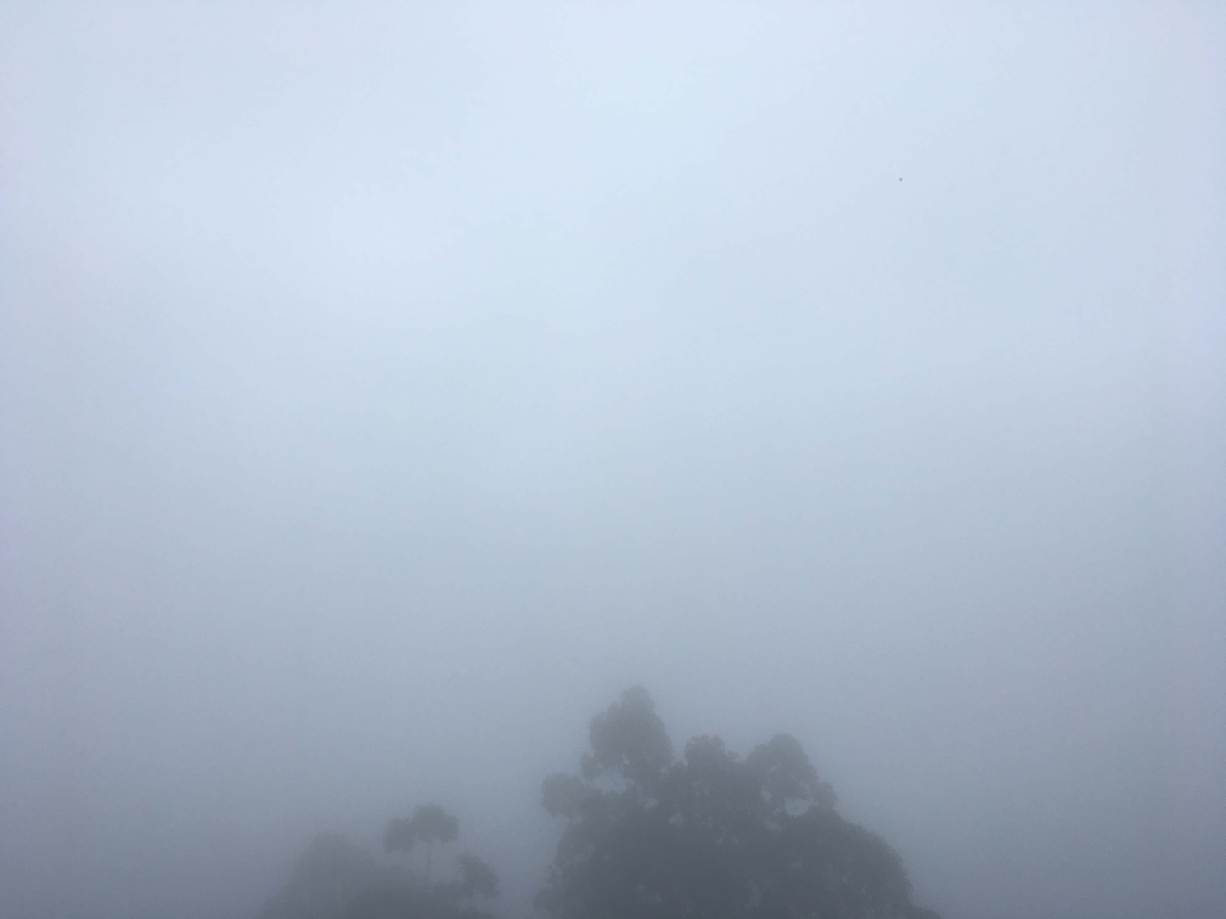 Foggy morning in Munnar