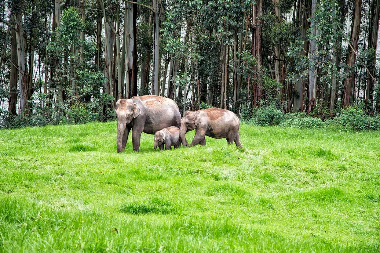 Family of elephants in Munnar, India